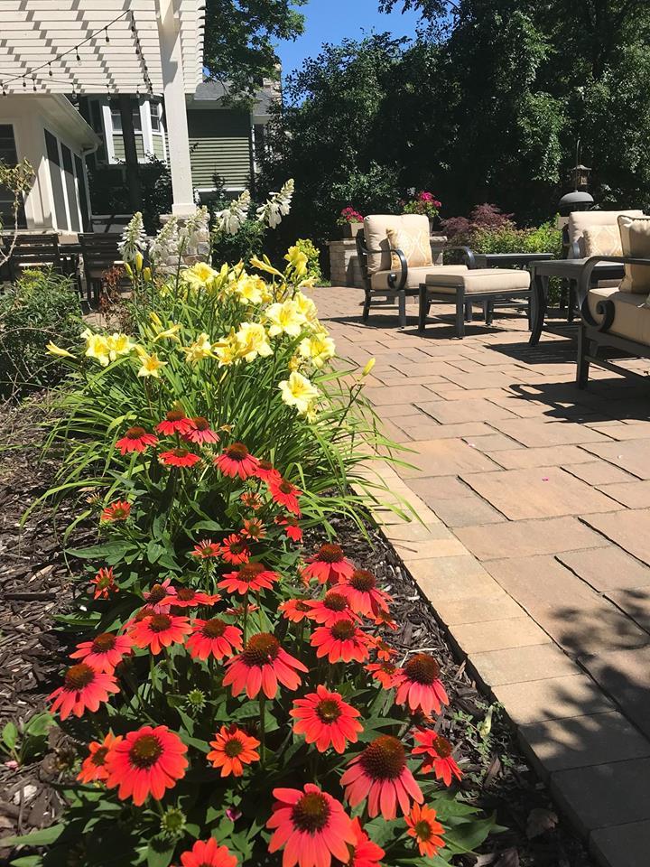 Walkway - Plants